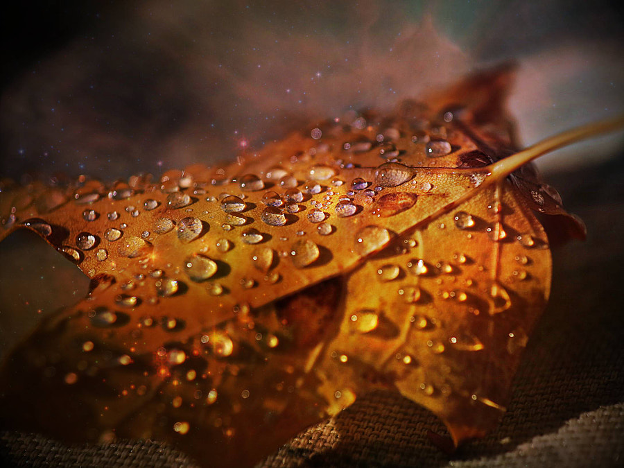 Photograph After the autumn's cold rain! by Pierre Alarie on 500px