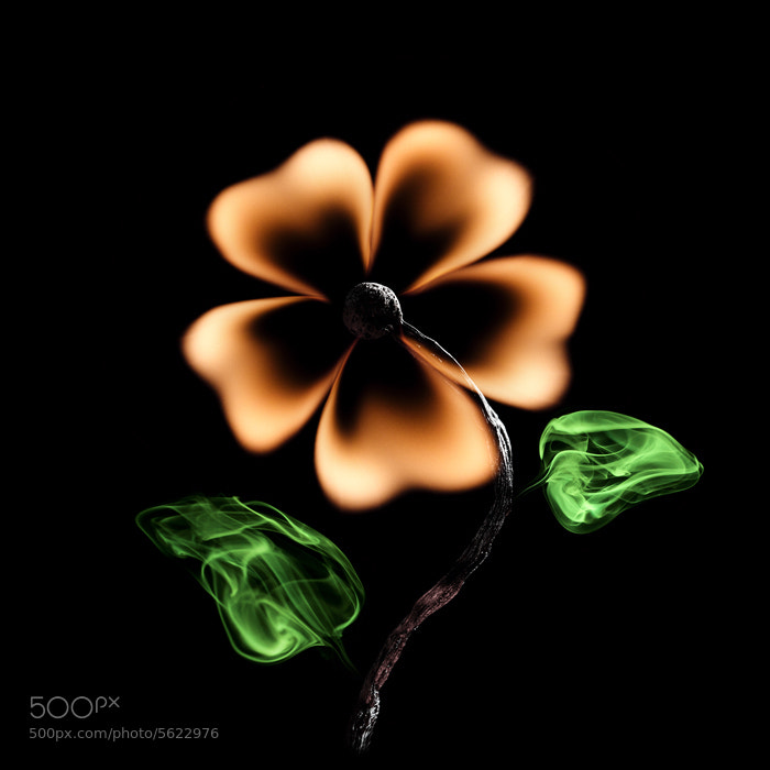 Photograph Цветок / Flower by PolTergejst  on 500px