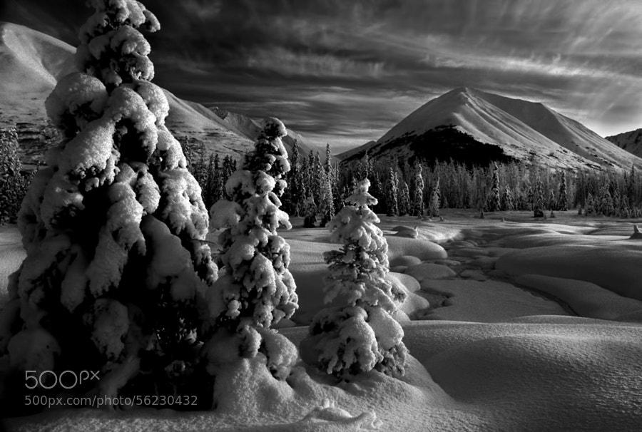 Winter Wonderland! by Carlos Rojas on 500px.com