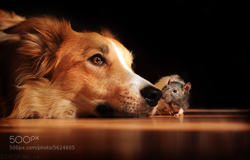 Photograph Real friends by Ksenia Raykova on 500px