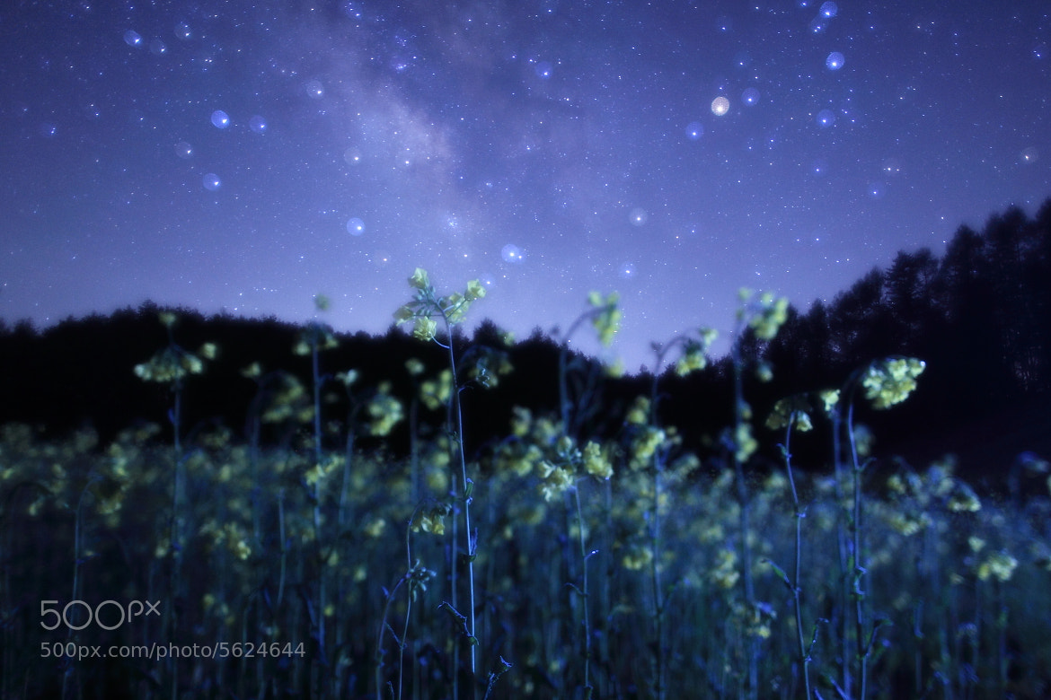 Photograph Melody of flowers by Noriko Tabuchi on 500px