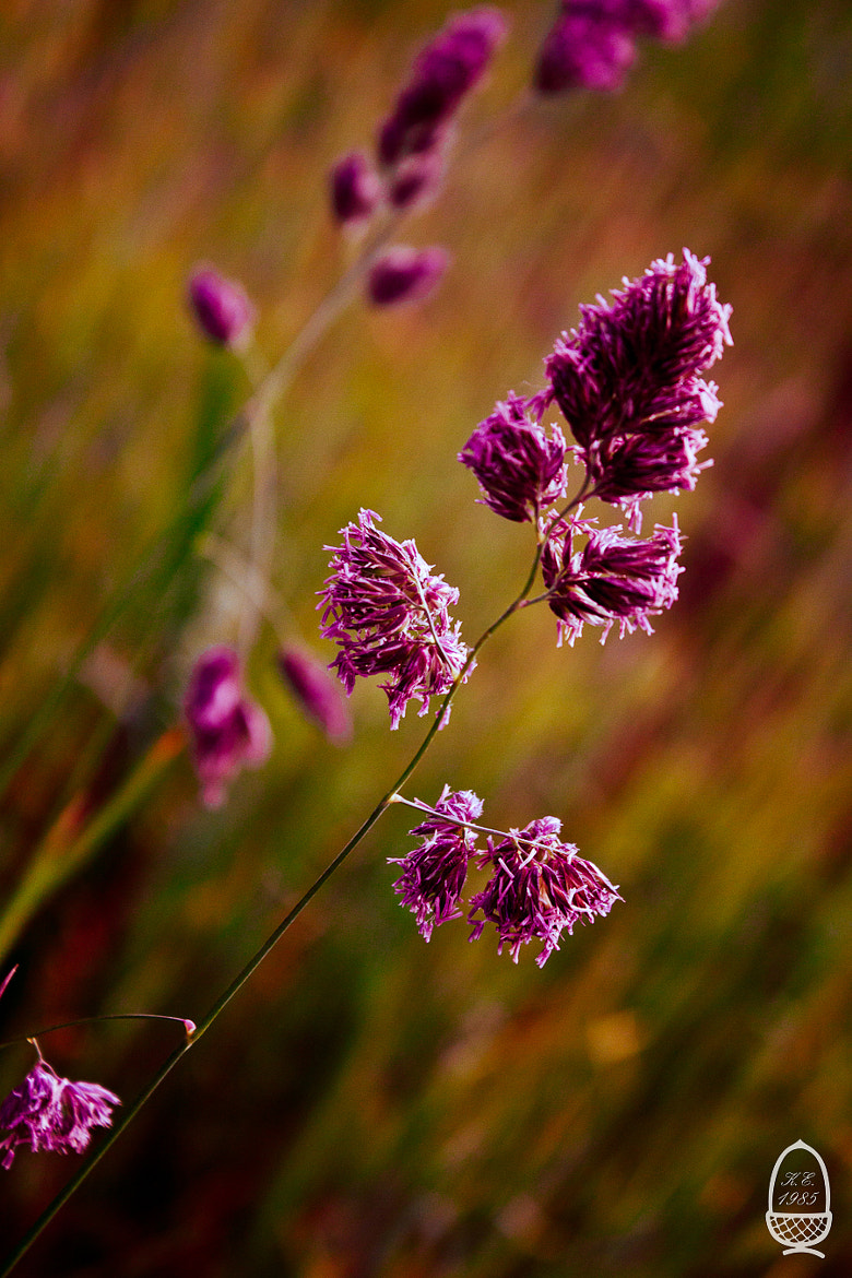 Photograph False flowers by Katrin Eichleitner on 500px