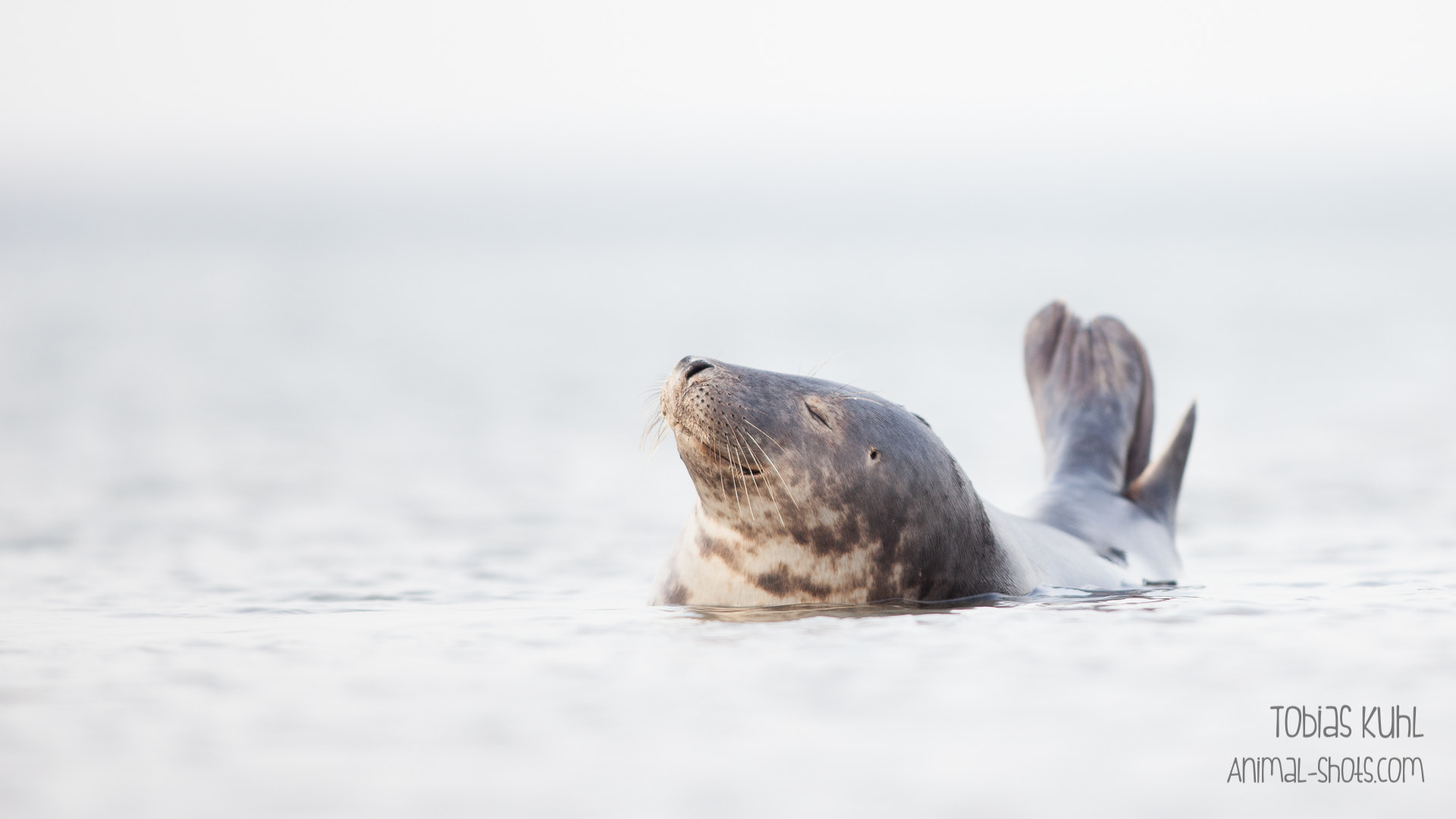 Photograph Happy Swimming by Tobias Kuhl on 500px