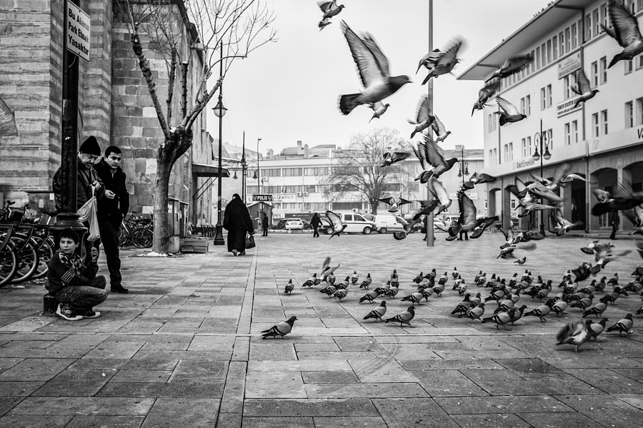A boy and the pigeons