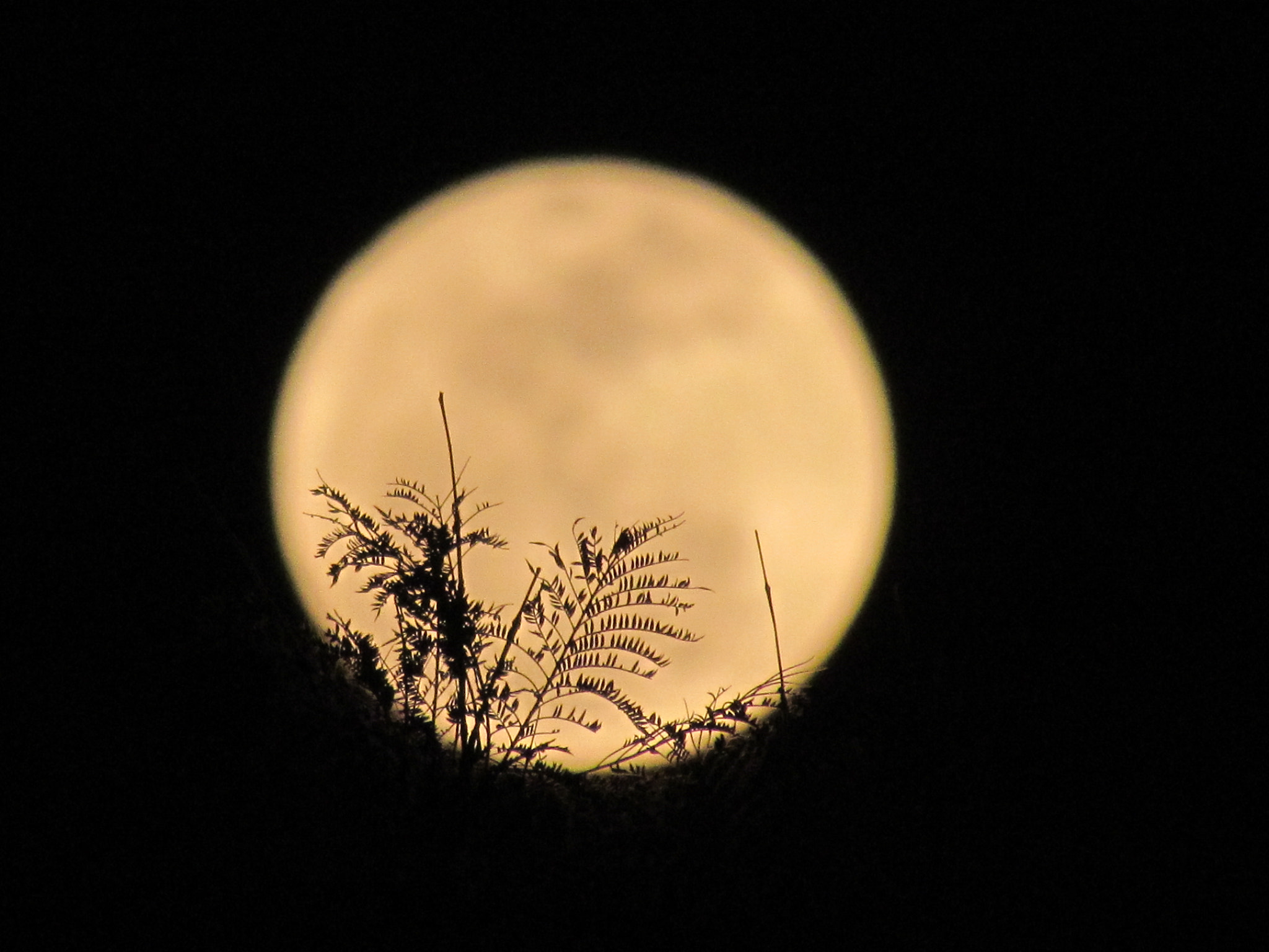 Photograph leaves and moon behind by Kim Kestenboum on 500px