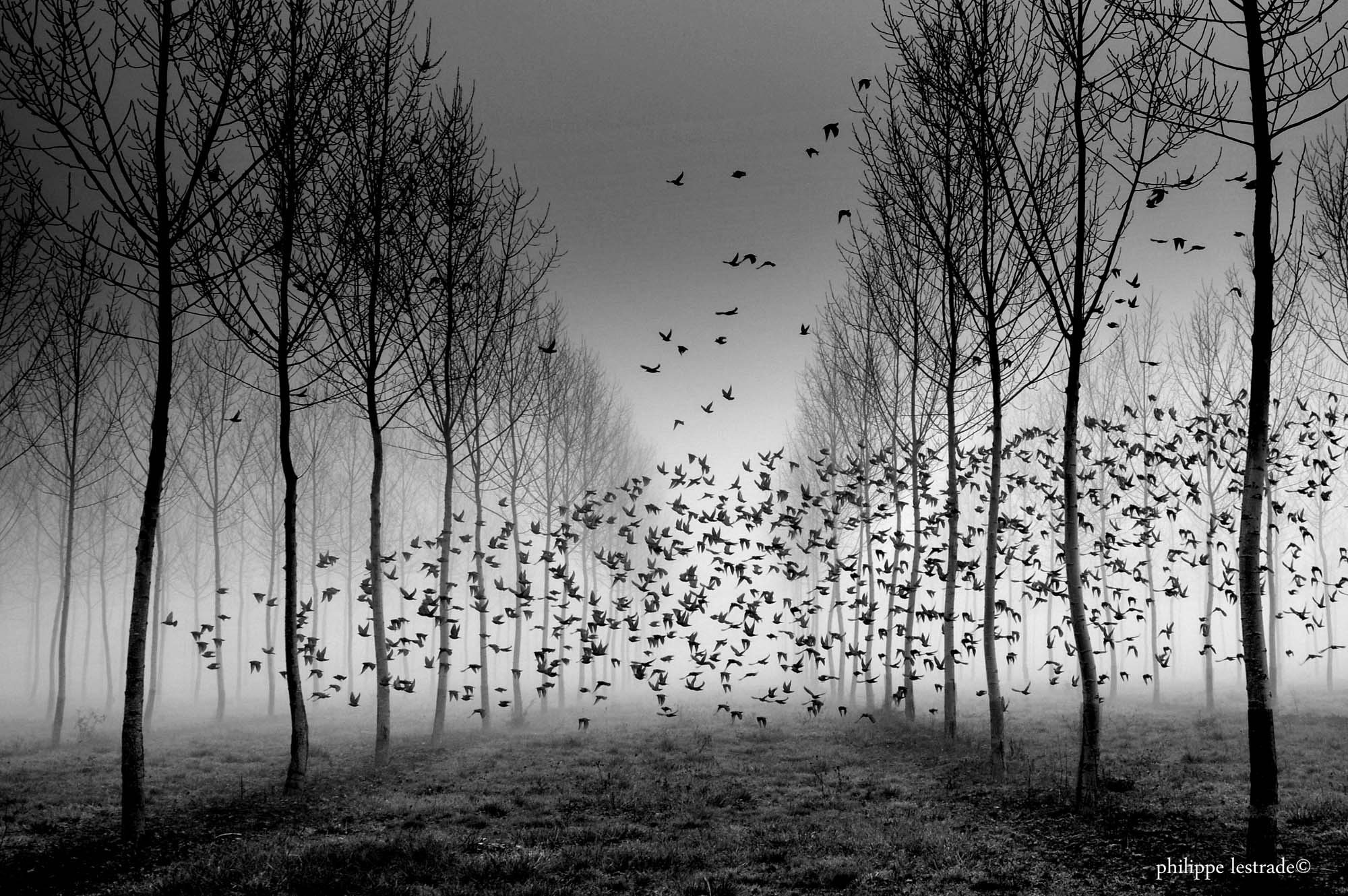 Photograph Le vol by Philippe Lestrade on 500px
