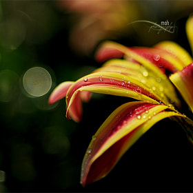 Dew drops  by Mohan Duwal (mkduwal)) on 500px.com