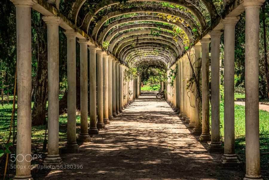Photograph Jardim Botânico...Rio de Janeiro...Brasil... by Manoel Reis on 500px