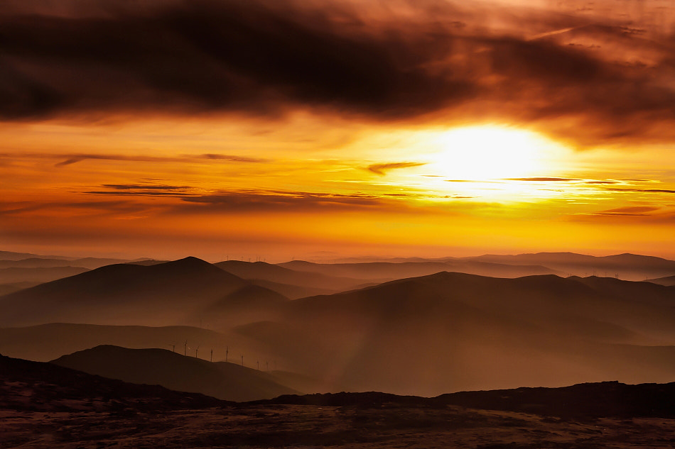 Photograph Golden Mood by Rui David on 500px