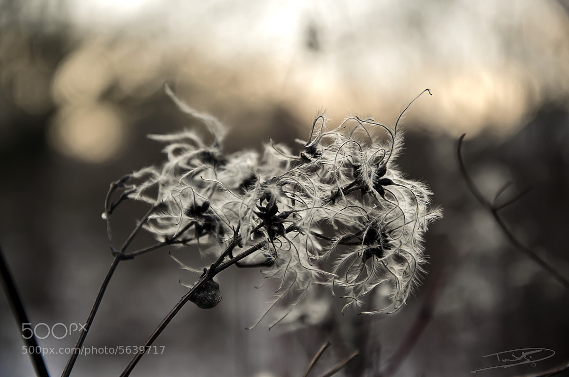 Photograph soft touch by Daniel Beck on 500px