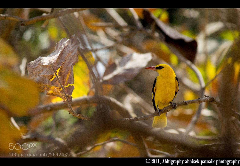 Photograph Beauty in Backyard by Abhisek Patnaik on 500px
