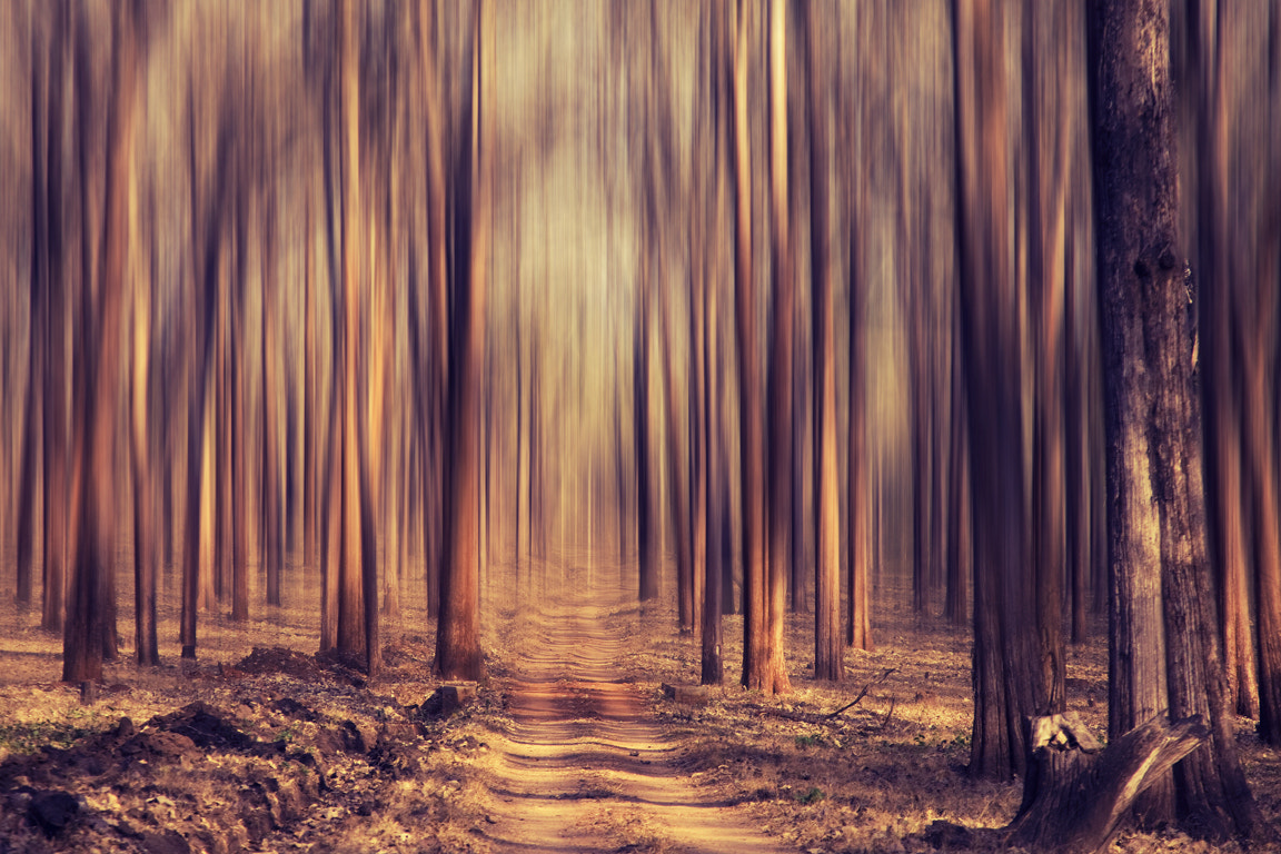 Photograph Forest dream! by Vinoth Chandar on 500px