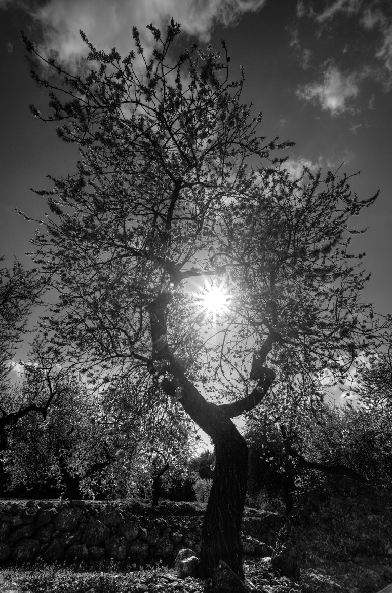 Photograph Light and nature by Javier Fuster García on 500px