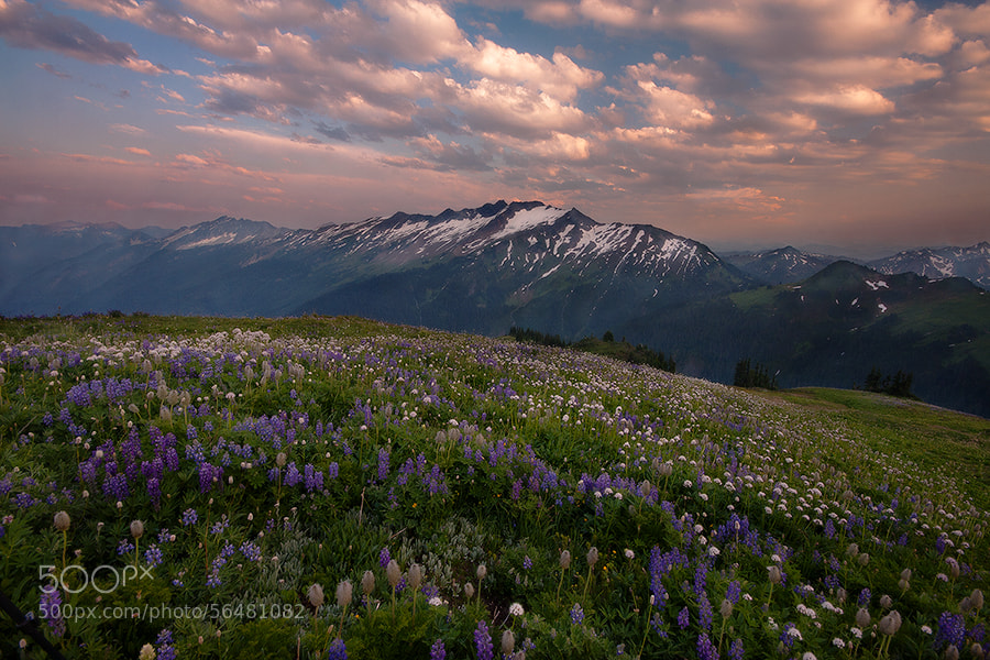 Photograph Blooming For Miles by Trevor Anderson on 500px