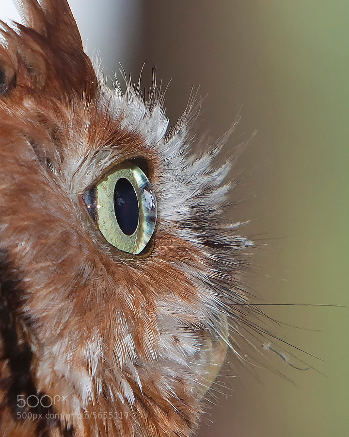 Photograph Inside Owl's Eye by Miguel Angel Leyva on 500px