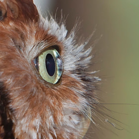 Inside Owl's Eye by Miguel Angel Leyva (MiguelAngelLeyva)) on 500px.com