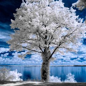 Geneva, NY - Infrared by Bob Vishneski (EpochPhoto) on 500px.com