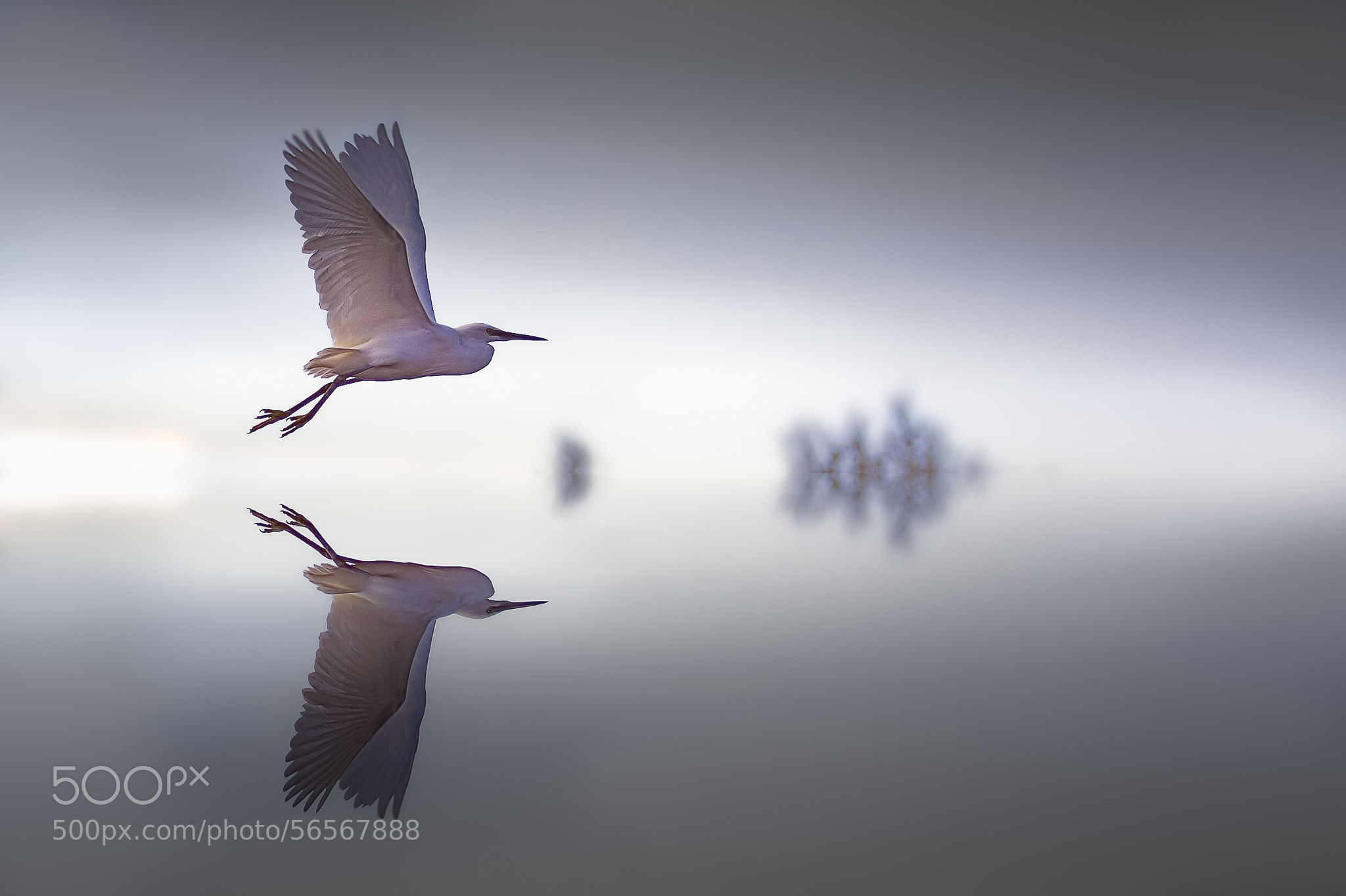Photograph To fly through the window by Martine Benezech on 500px