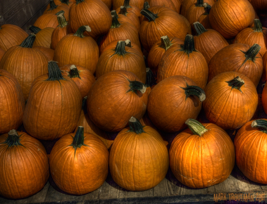 Photograph Pumpkin is a Color by Mark T on 500px