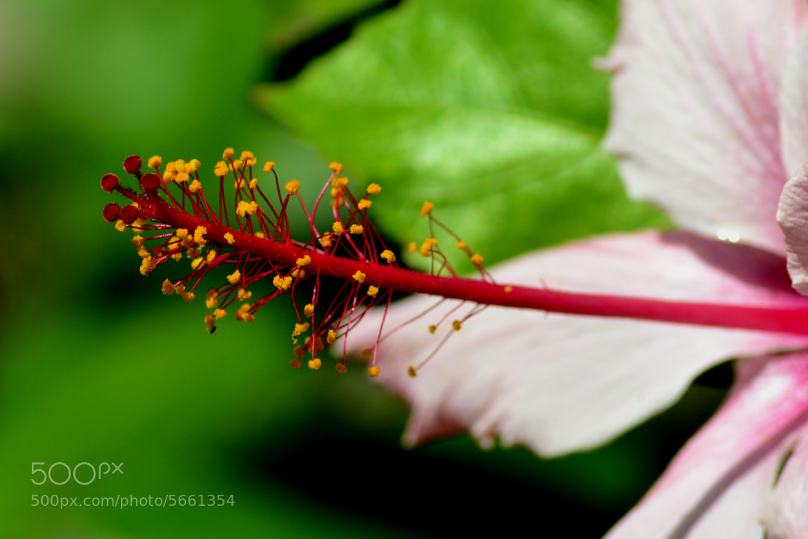 Photograph Flower Porn by Percy Ferry on 500px