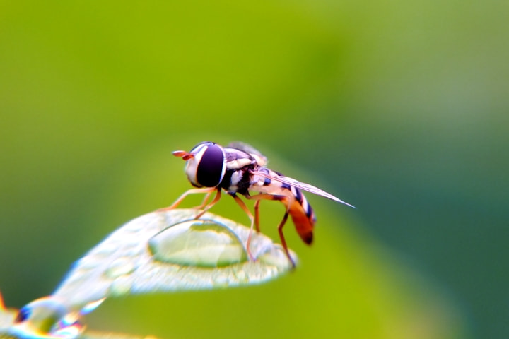 Photograph little fly by Febrian Fajar on 500px