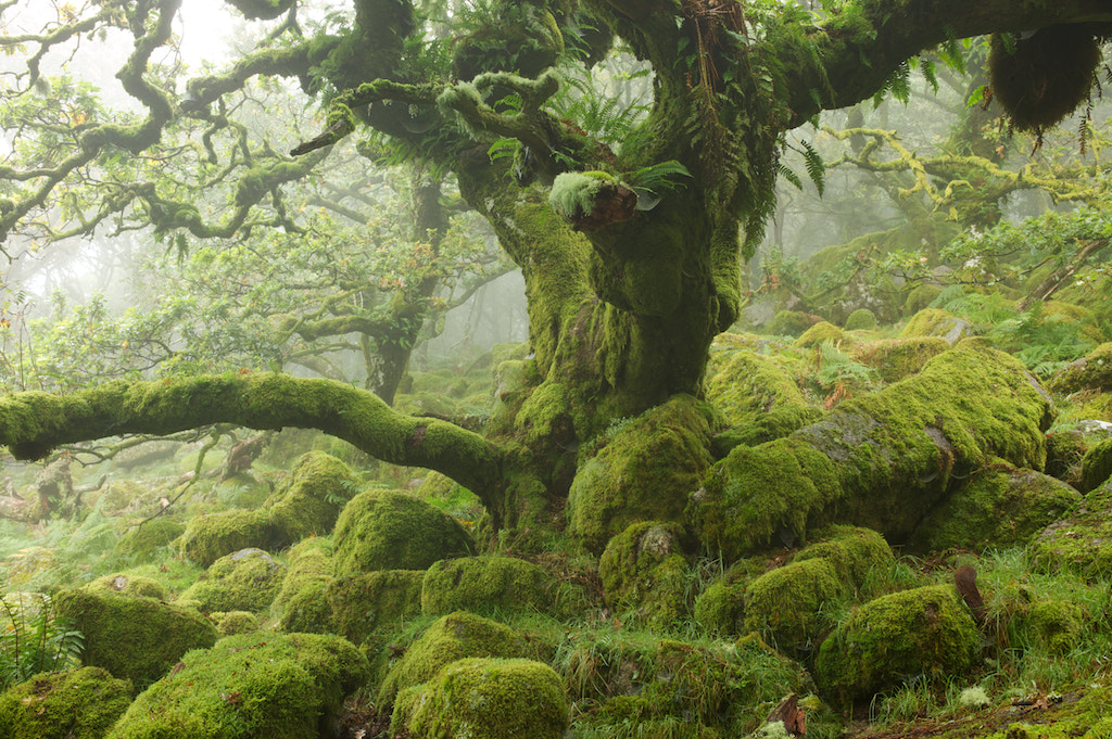 Photograph Green Realm by duncan george on 500px