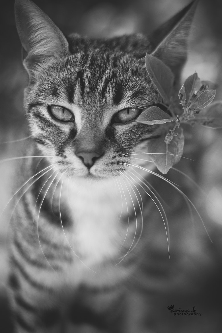 Photograph Meow by Arina Kortchov on 500px