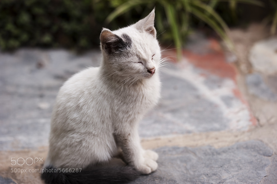 Sleeping kitten by Miguel Rodríguez Lago (migui) on 500px.com