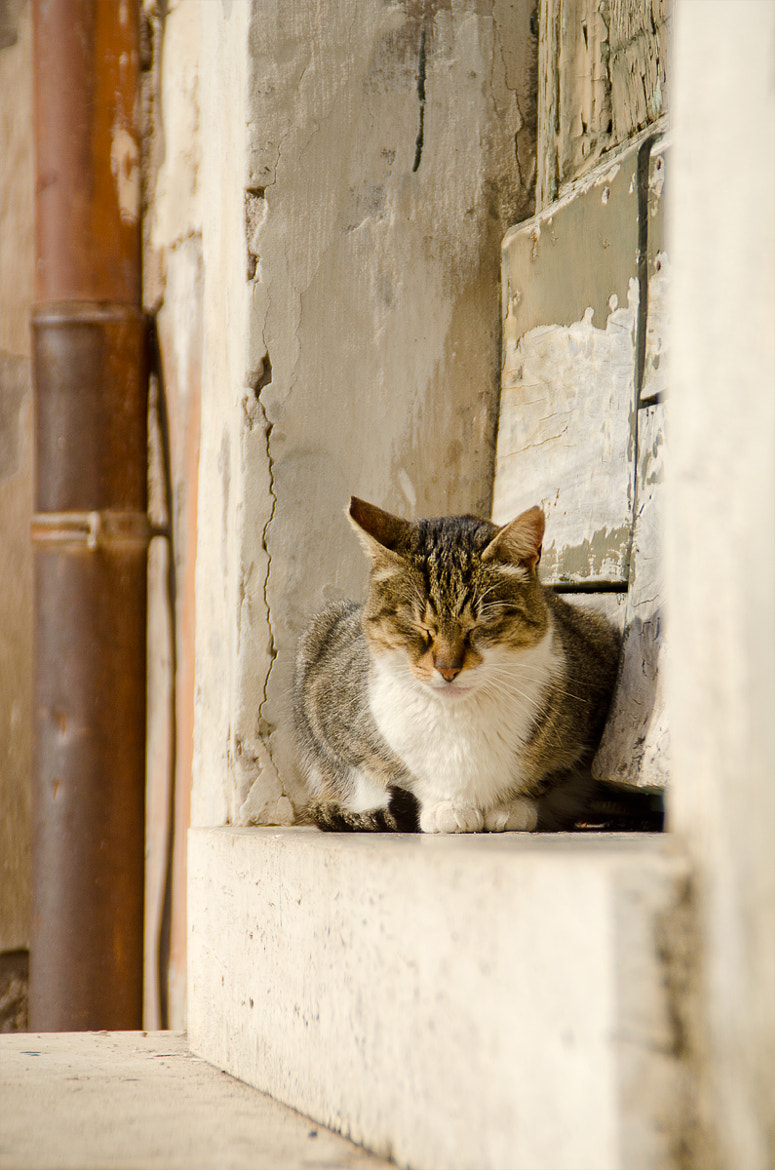 Photograph Cat in Rome by Andreas Skoog on 500px