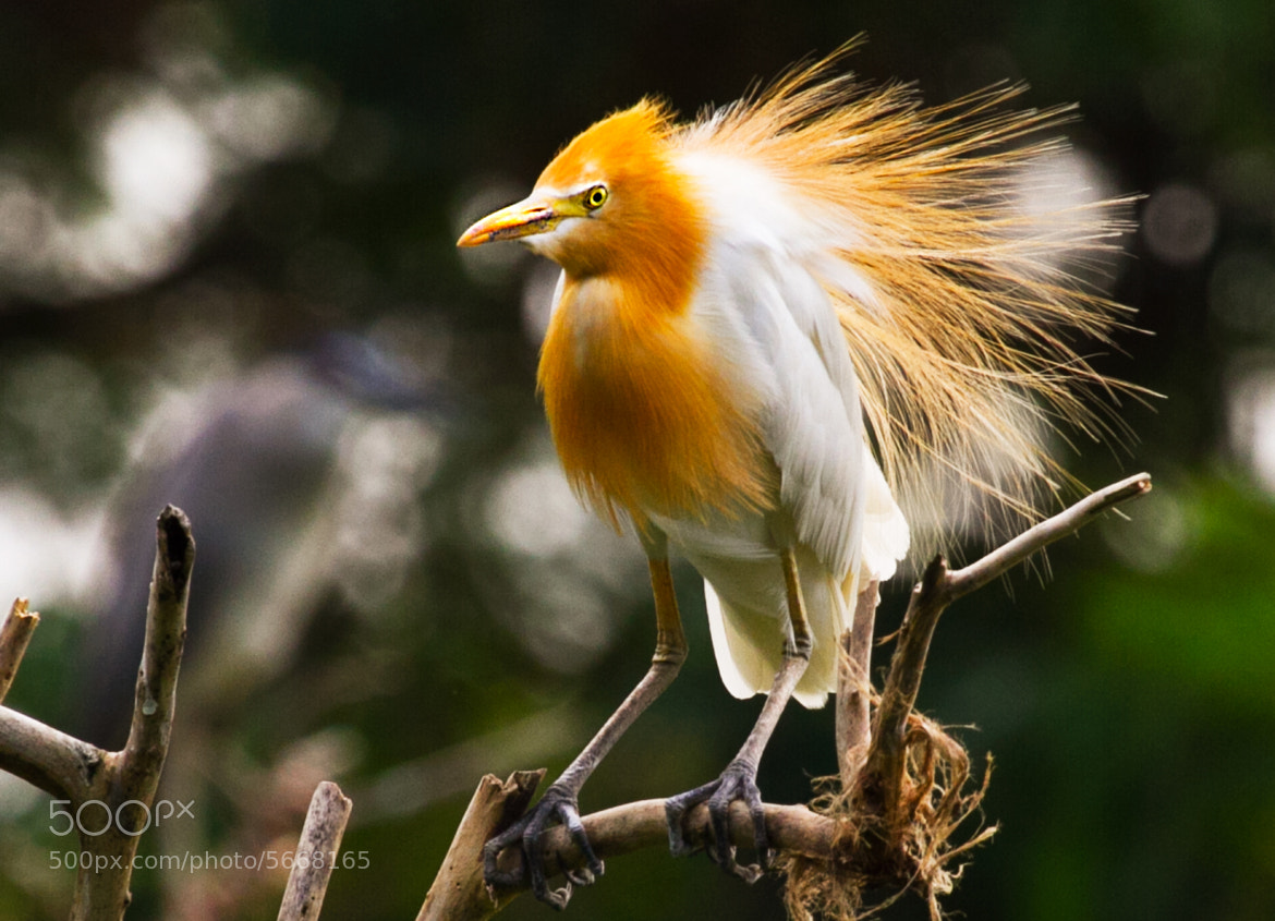 Photograph Yellow Melow  by Hendrik Cuaca on 500px