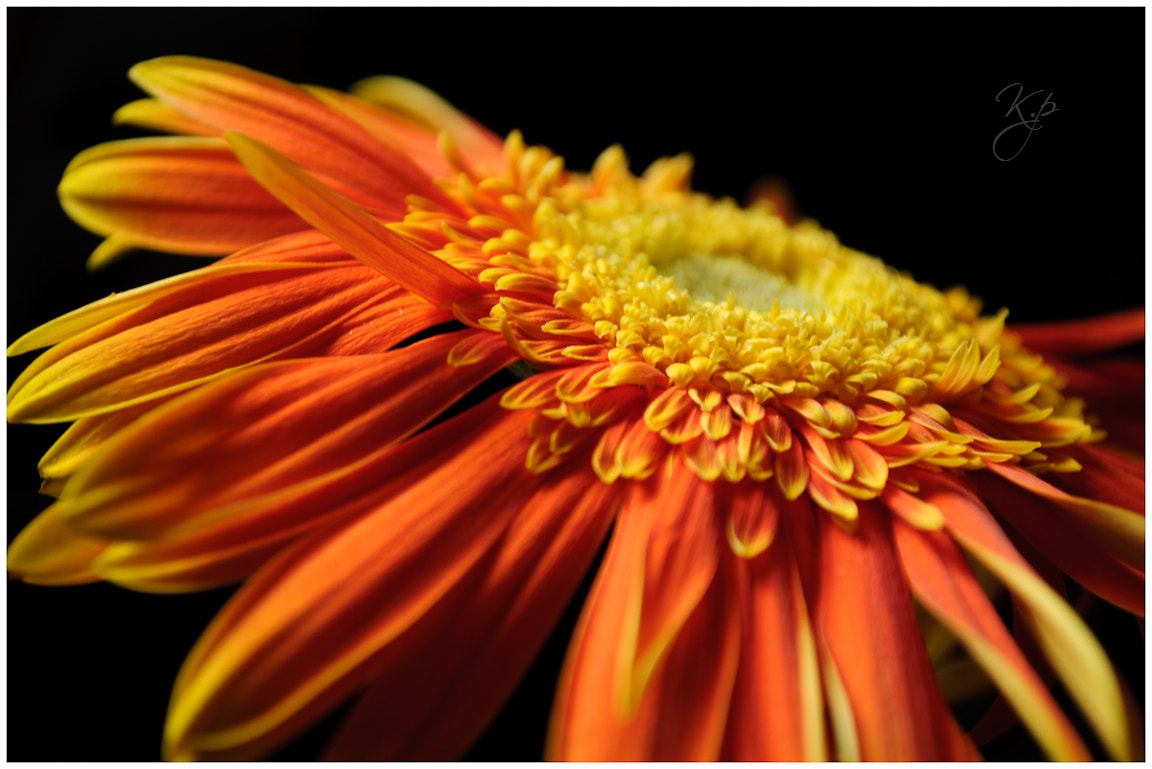 Photograph By plucking her petals, you do not gather the beauty of the flower- Rabindranath Tagore  by Krishna ! on 500px