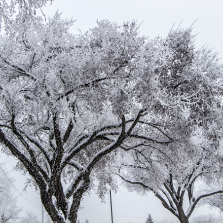 Hoarfrost can make winter so beautiful