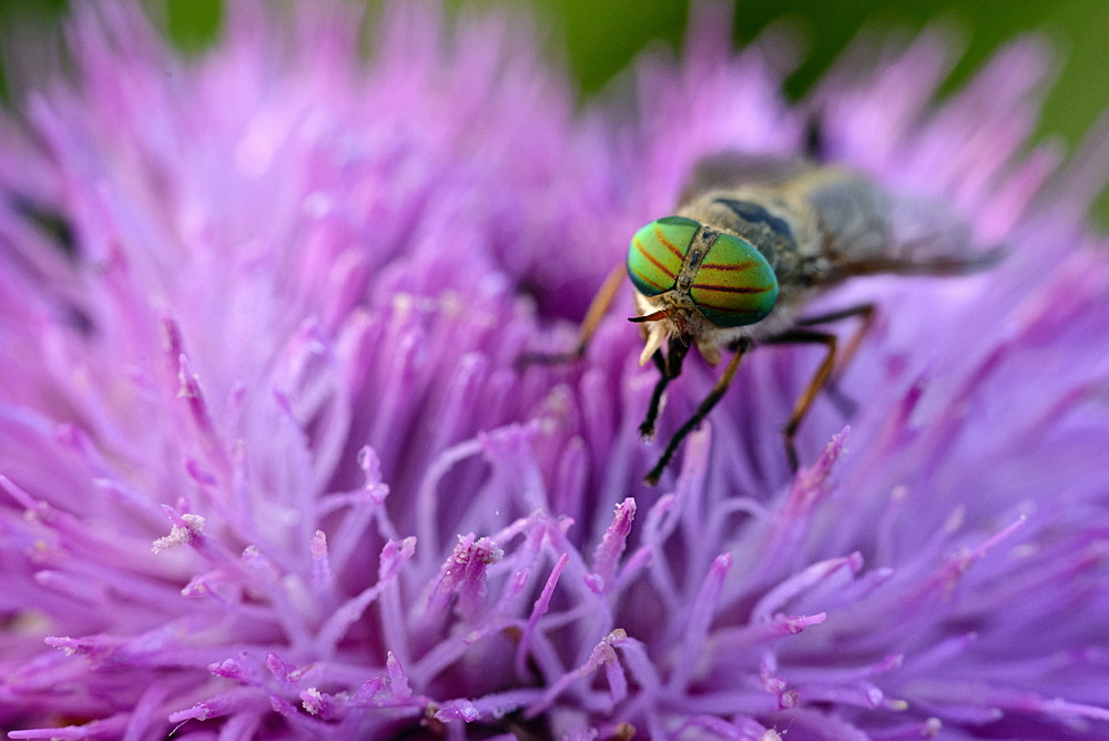 Photograph Eyes of green by Velian Jagev on 500px