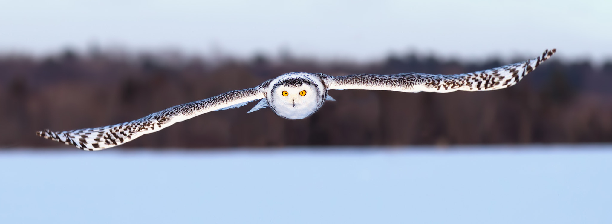 Photograph Snowy Owl by Jim Cumming on 500px