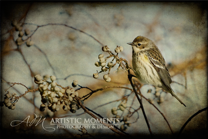 Photograph Little Singer by Amy McDow on 500px