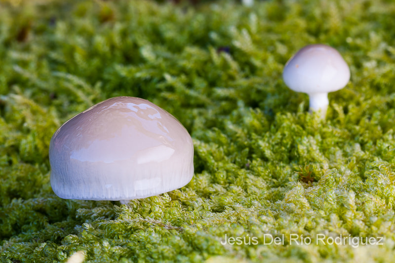 Photograph Mushrooms by Jesús Del Río on 500px