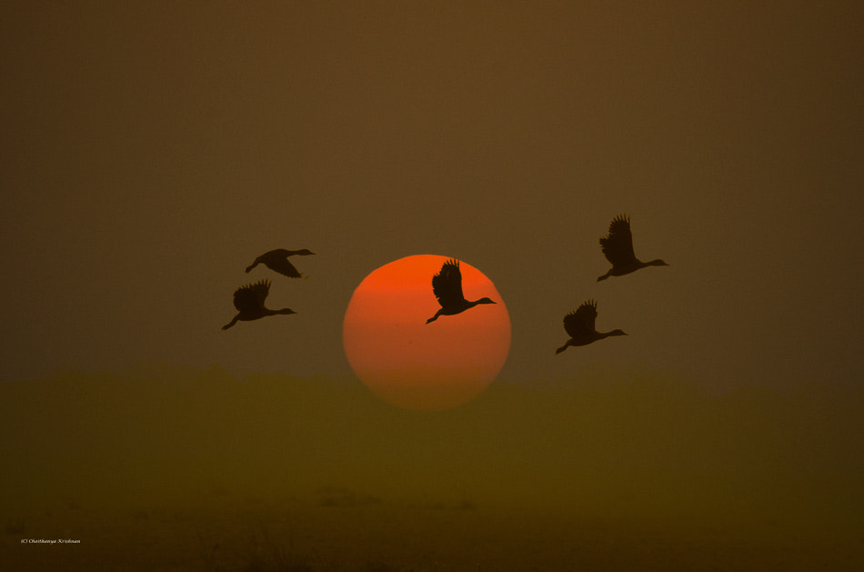 Photograph Coming home for the night by Chaithanya Krishnan on 500px