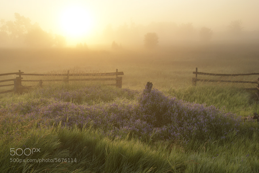 Photograph Farmer's Field at Sunrise by Robert Williams on 500px