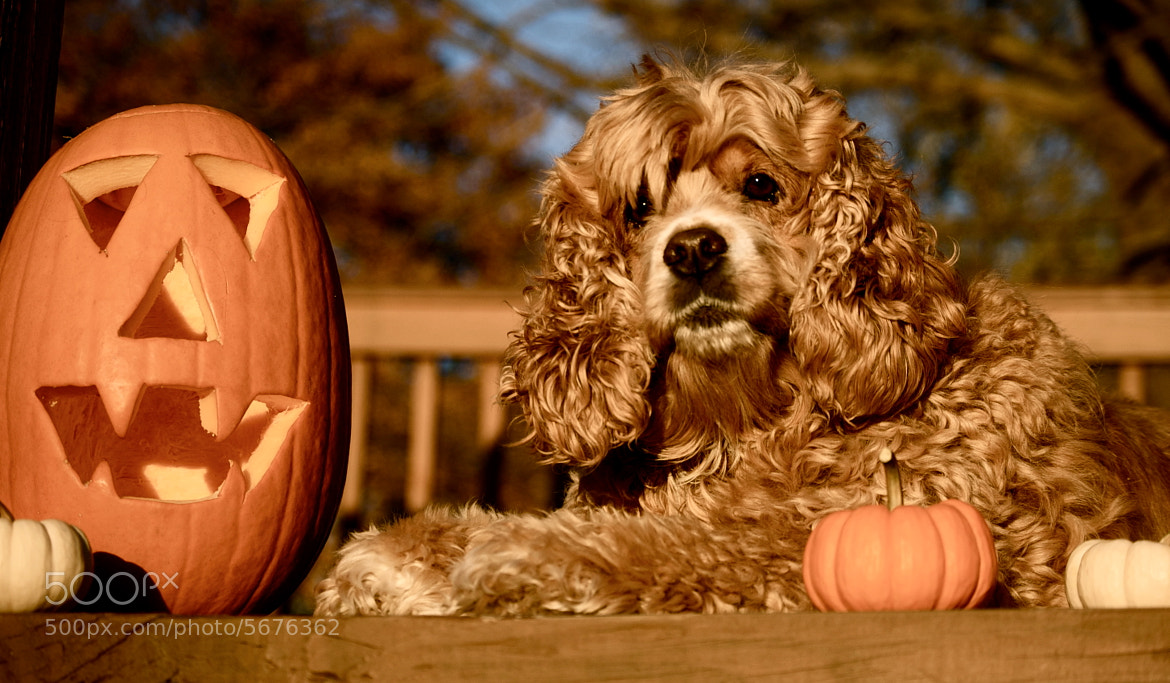 Photograph Pumpkin by Briana Winters on 500px