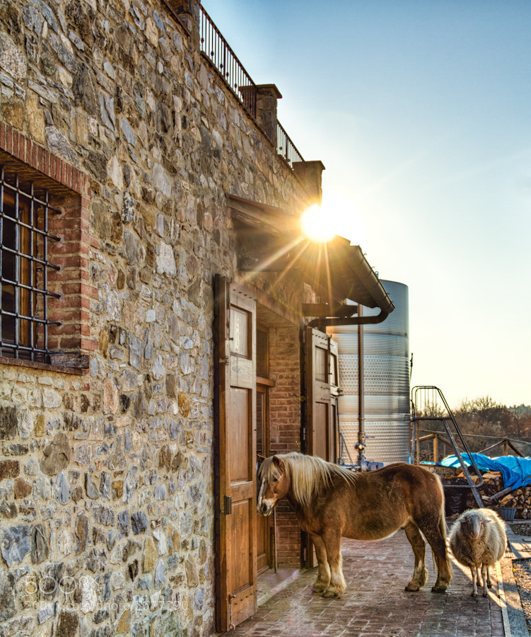 Photograph A Winery and Their Pets by David Edenfield on 500px