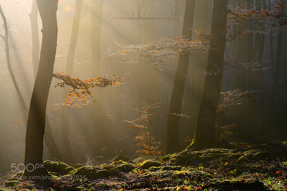 Photograph Forest temple by Josu Rollan  on 500px