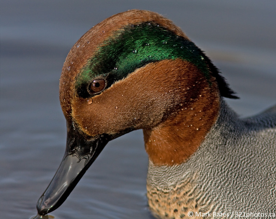 Photograph Teal Portrait by Mark Bates on 500px
