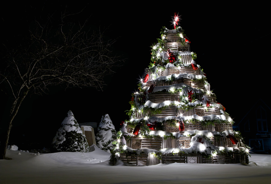 Lobster Trap Christmas Tree, автор — Abby Krim на 500px.com