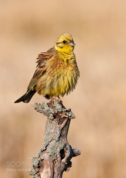 Photograph Bad Hair Day by Lea Roberts on 500px
