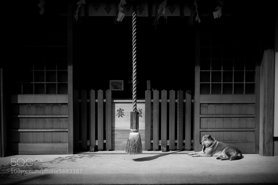 Photograph A dog and Shinto shrine by Shigenobu Kuroki on 500px