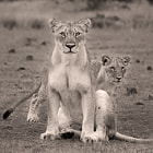 ������, ������: 3 Lions Protection