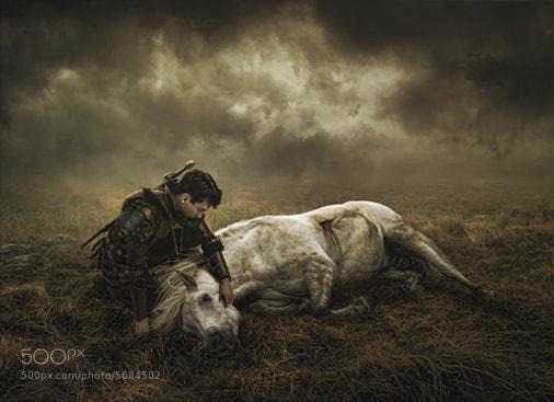 Photograph War Horse by Scott Black on 500px