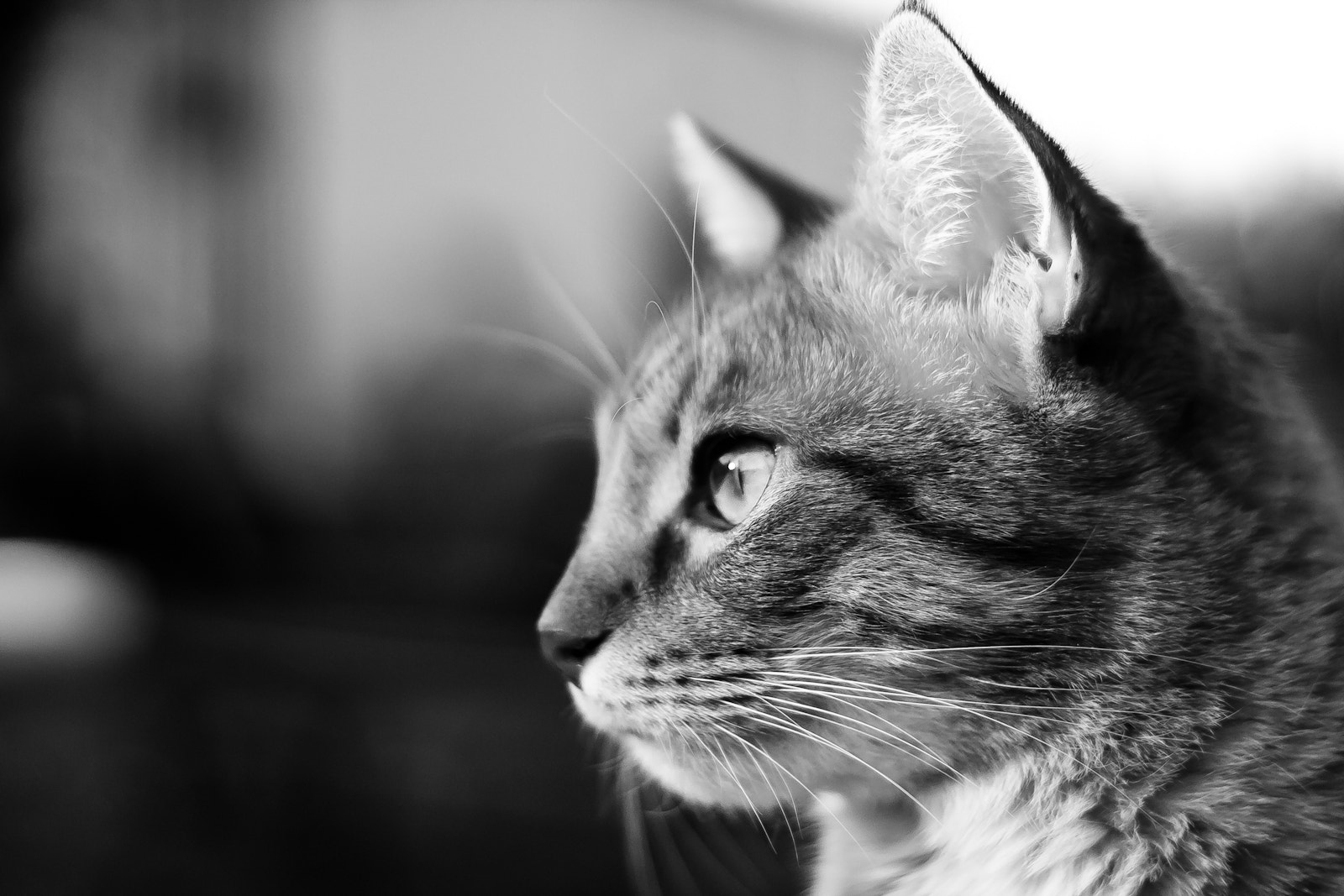 Photograph Black & White Cat by David Lierman on 500px