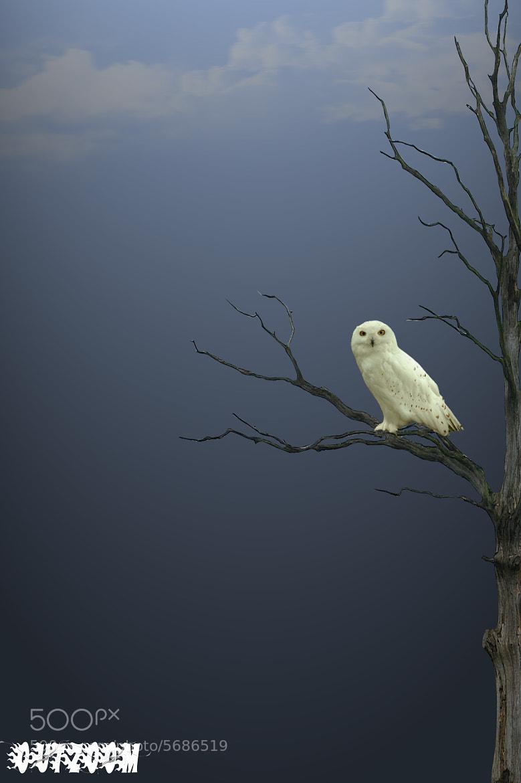 Photograph Owl by Vahid Esmailzadeh on 500px