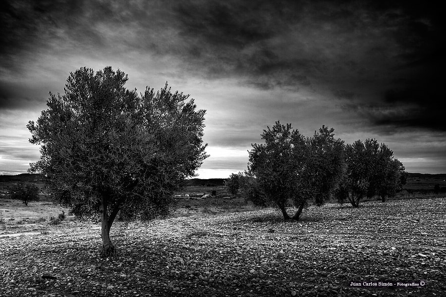 Photograph 3 Olivos (3 Olives) by Juan Carlos Simón on 500px